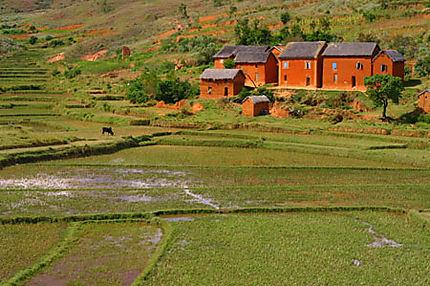 paysage-malgache