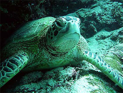 Gros plan de tortue