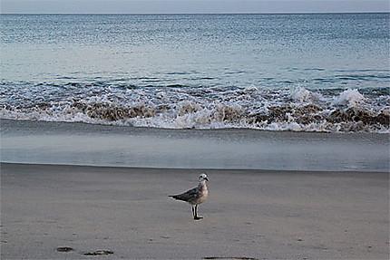 Playa Santa Clara - Côte Pacifique