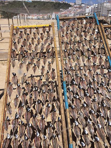 Les sardines sont séchées au soleil à Nazaré