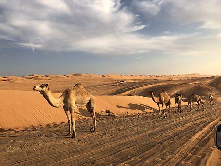 Entre les dunes, les gardiens du désert, Oman