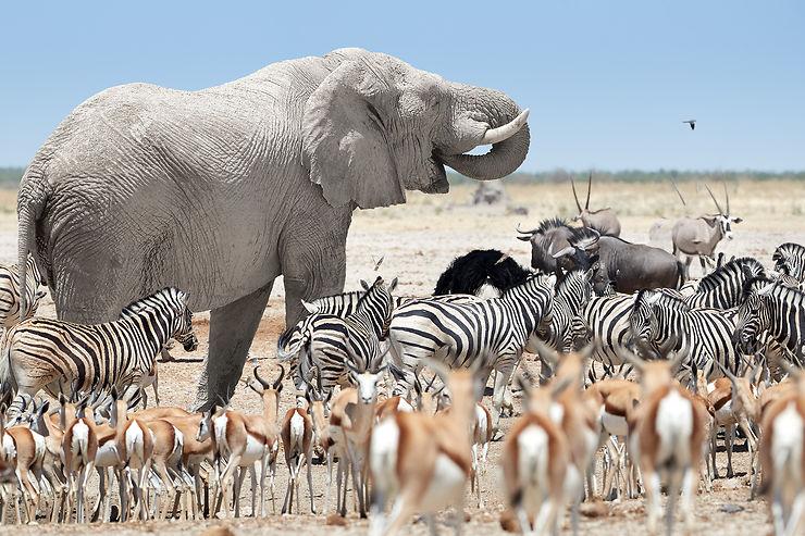 Le parc national d'Etosha : l'une des plus belles réserves d'Afrique