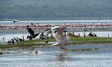 Lac et parc national de Nakuru (vallée du Rift)