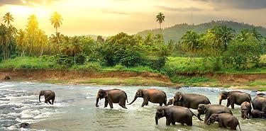 Voyage authentique au Sri Lanka tout compris