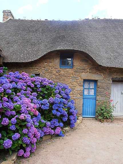 Hortensias et toits de chaume