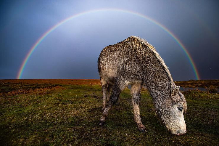 Poney sous un arc en ciel, Cefn Bryn, Pays de Galles