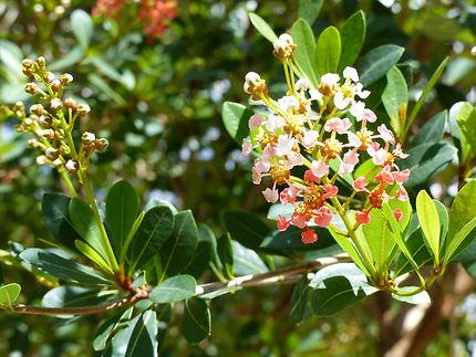 Arbustes en fleurs, jardin botanique de Deshaies : Fleurs : Jardin ...