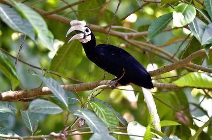 La faune endémique des Philippines