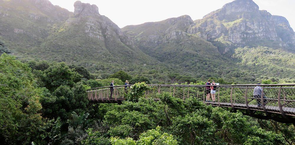 Retour d'Afrique du Sud : de la TABLE aux Eléphants d'ADDO