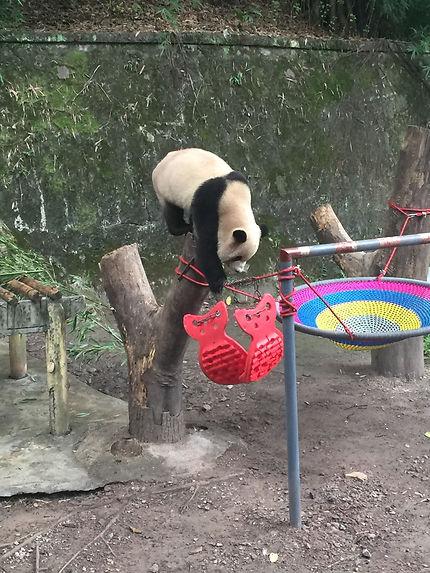 Maison des Pandas à Chongqing