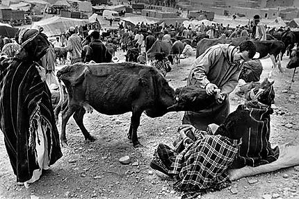 Achat de bétail