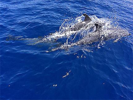 Magnifiques dauphins !
