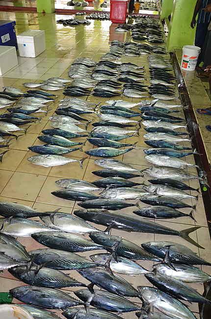 Marché aux poissons à Malé