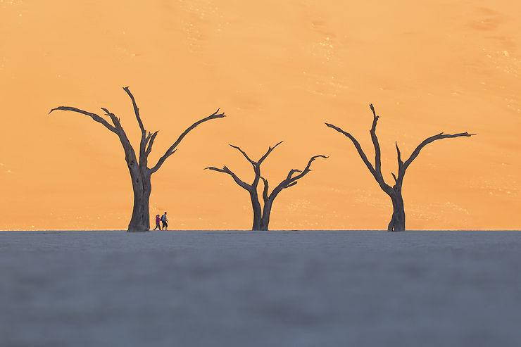 La forêt surréaliste de Deadvlei, carte postale de Nambie