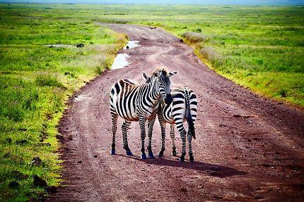 Chassé-croisé sur les pistes du cratère Ngorongoro