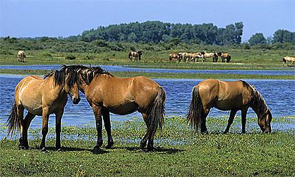 """Résultat de recherche d'images pour """"chevaux henson baie de somme"""""""