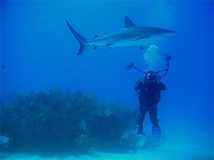 Requin et pixels
