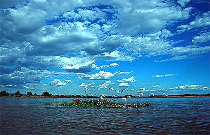 Piroguer sur la rivière Tsiribihina à Madagascar