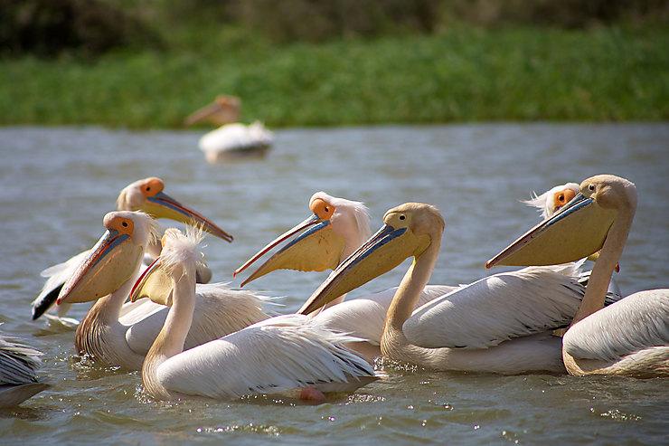 Se mettre dans la peau d'un ornithologue (ébahi) en visitant le parc national du Djoudj.