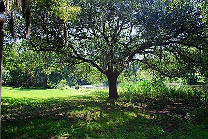 La nature à Vermilionville
