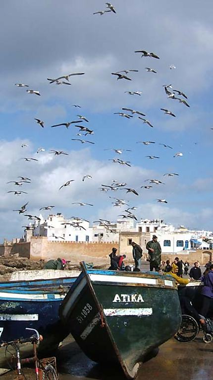 Essaouira, retour de pêche