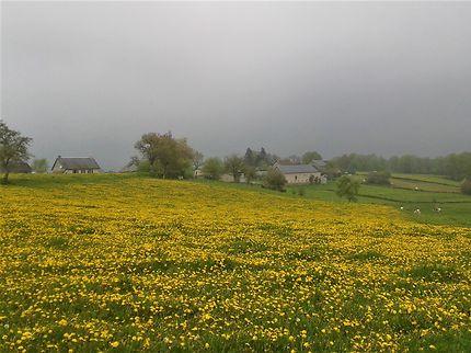En jaune et gris, La Bourdasse, Creuse