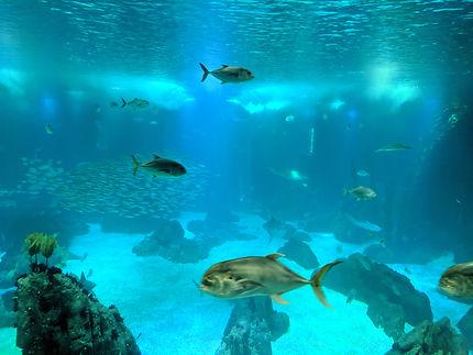 Énorme bassin à l'Océanorium de Lisbonne