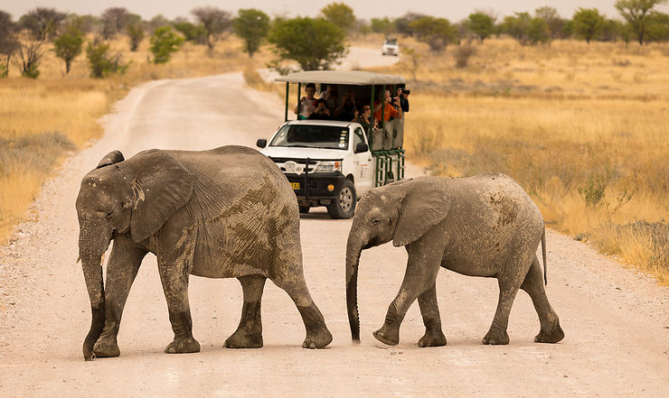 Des safaris privés pas chers
