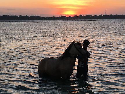 Coucher de soleil nettoyage du poney