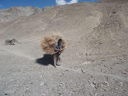 Paysan du Ladakh