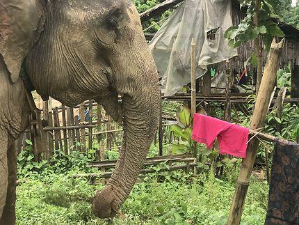 Avec les éléphants dans la jungle du Myanmar