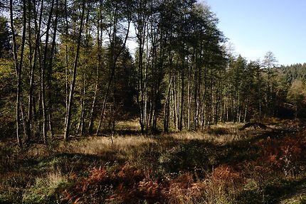 Forst Wenau