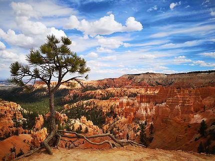 Un arbre à Bryce Canyon