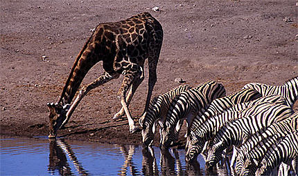 Namibienne rencontres en ligne