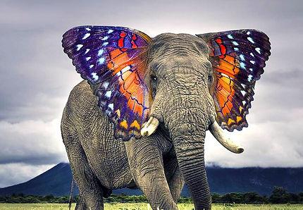 Éléphant de couleur à Sihanoukville
