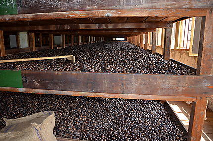 Manufacture de noix de muscade à Gouyave