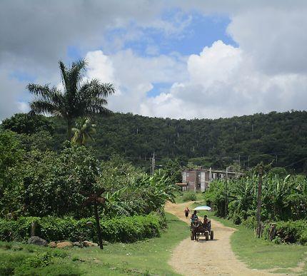 Dans la campagne cubaine