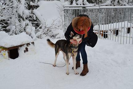 Adorables chiens de Laponie, Rovaniemi