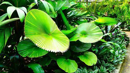 Jardin Botanique de Cairns
