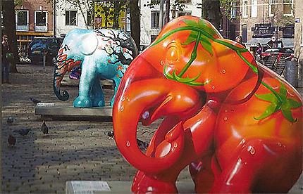 On signale une invasion d'élephants