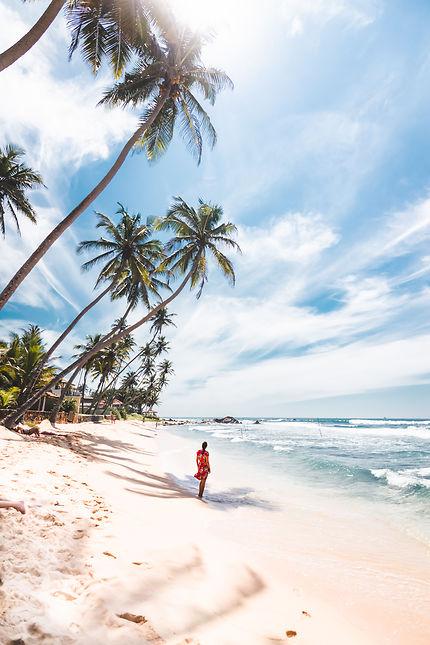 Sous les palmiers du Sri Lanka