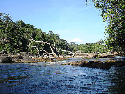 Descente du fleuve Approuague en pirogue