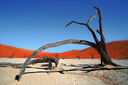 Namibie, désert de Sossusvlei
