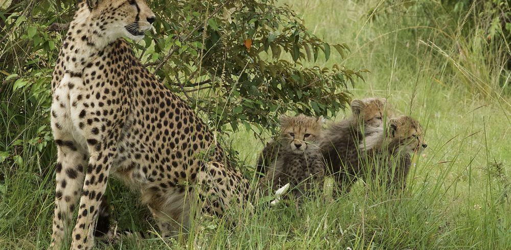9 jours au coeur du Masai Mara : « Looking for Imani »
