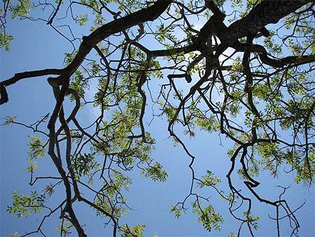 arbre ciel et le soleil arbres mahabalipuram mamallapuram tamil nadu inde routardcom - Arbre Ciel