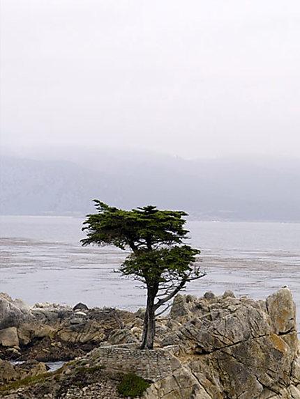 Lone Cypress à Pebble Beach