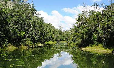 Parc national Andasibe-Mantadia