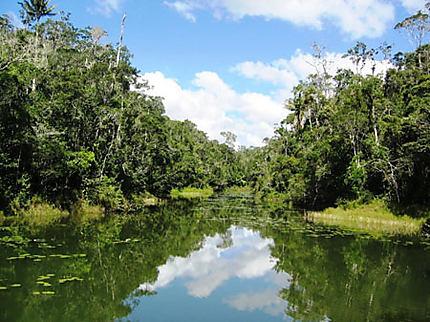 Forêt primaire à Mantadia