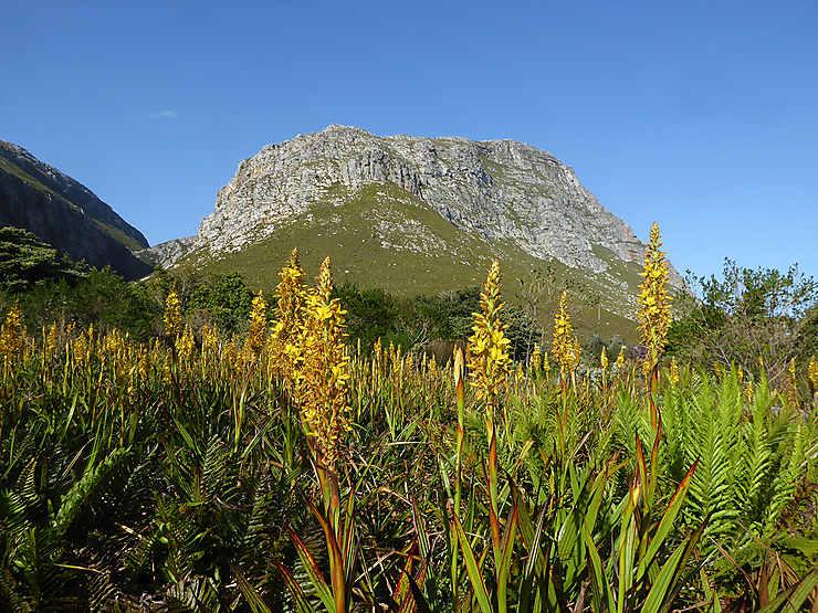 Les jardins botaniques, de Kirstenbosch à Stellenbosch