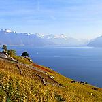 Le Lavaux et ses vignobles